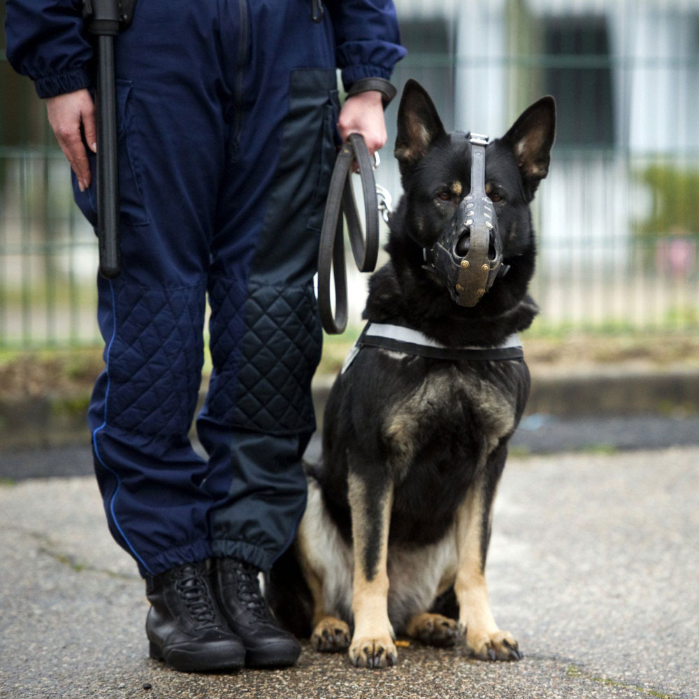 Dog, handler,